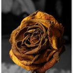 Rose in schwarz/weiß zweiter Versuch