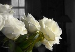 """""""Rose in weiss"""""""