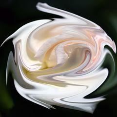 Rose (IV)