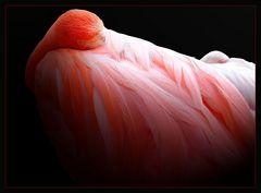 Rose l'oiseau