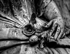 Rose (Melatenfriedhof)