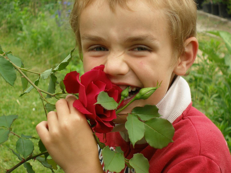 Rose mit Biss