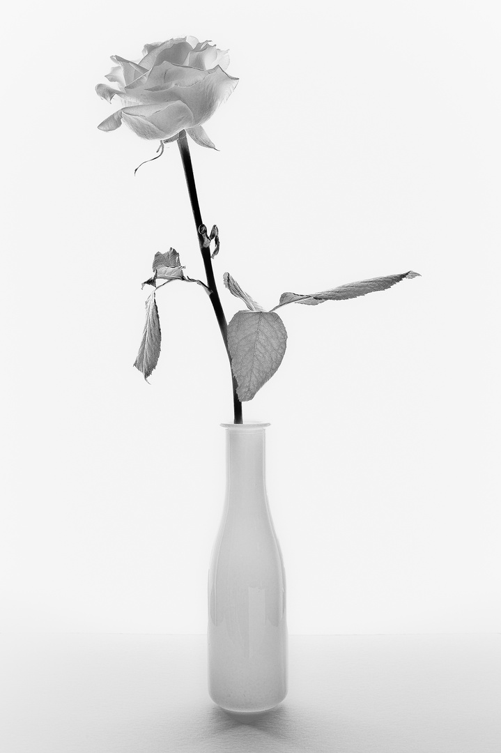 Rose mit Vase