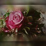 Rose _Nostalgie