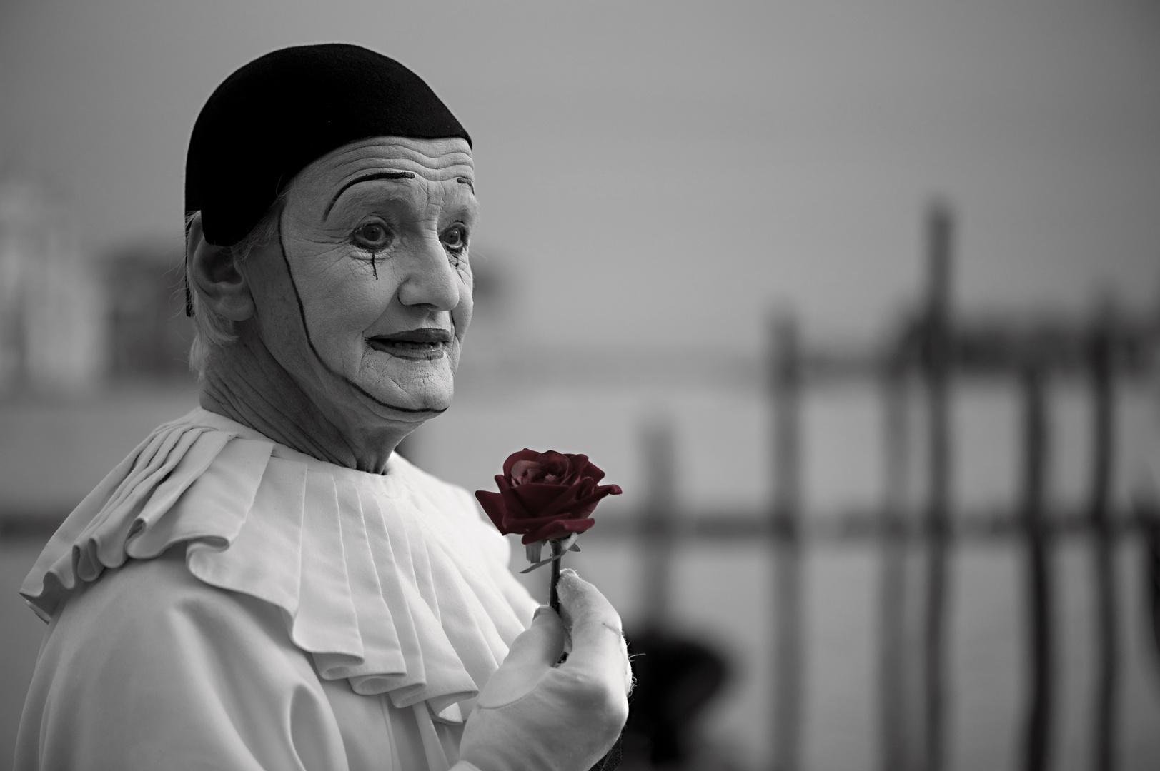 __rose of venice__