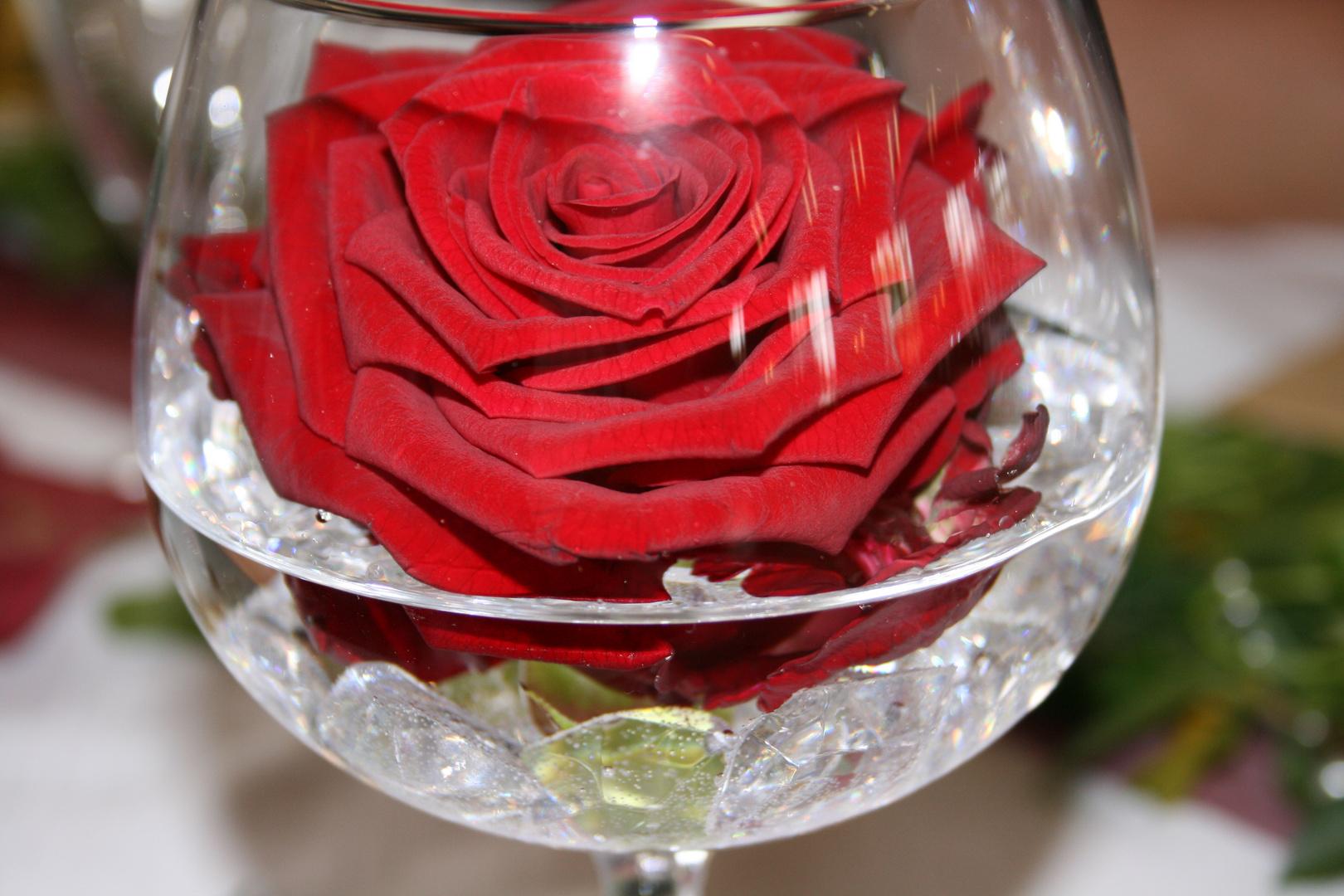 Rose on the Rocks