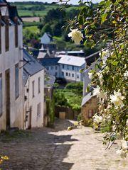 Rose - Pont-Croix - Finistere / Bretagne