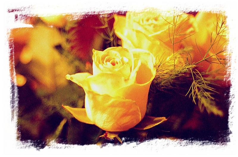 Rose - Portrait