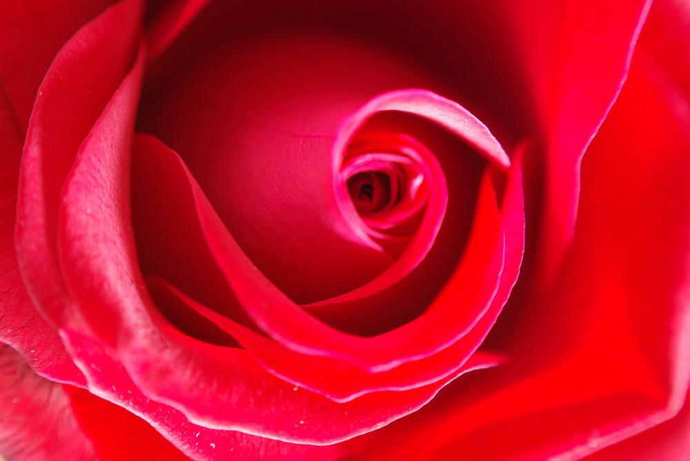 Rose Retroadapter