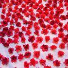 Rose rosse x te