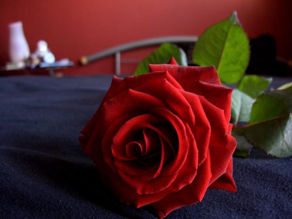 .: rose-scented :.