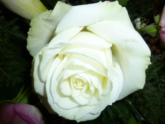 rose super grosse