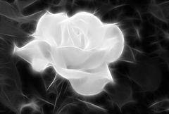 Rose / sw /