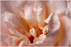 Rose-Tee
