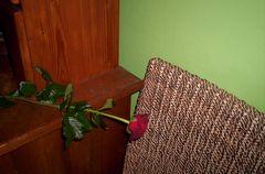 Rose und Stuhl