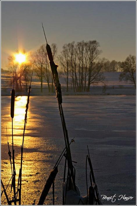 Roseau du soir - Lac de Michelbach