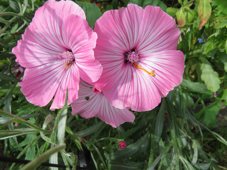 Rosee Blüten