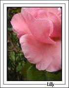 Rosée matinale 2
