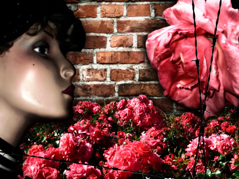 Rosegarden.