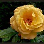 Roseiral 3