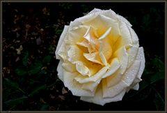 Roseiral 5