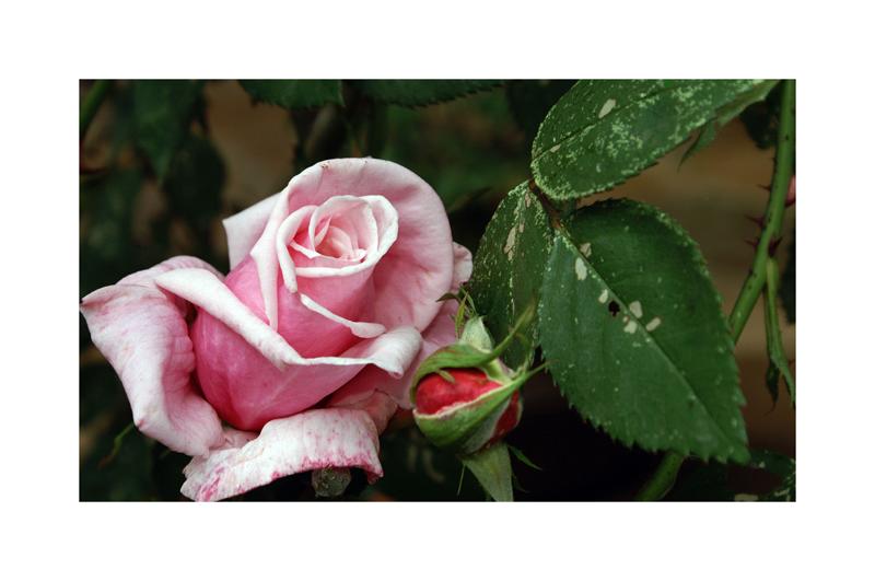 ~ rosen 09-01 ~