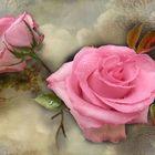 Rosen am Dienstag