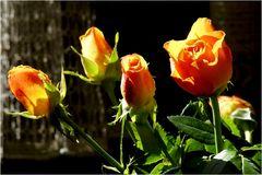 Rosen am Sonntag
