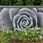 Rosen aus Dosen