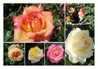 Rosen Collage1
