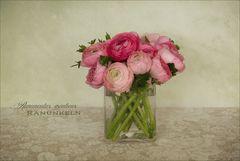 Rosen des Frühlings - Ranunkeln...
