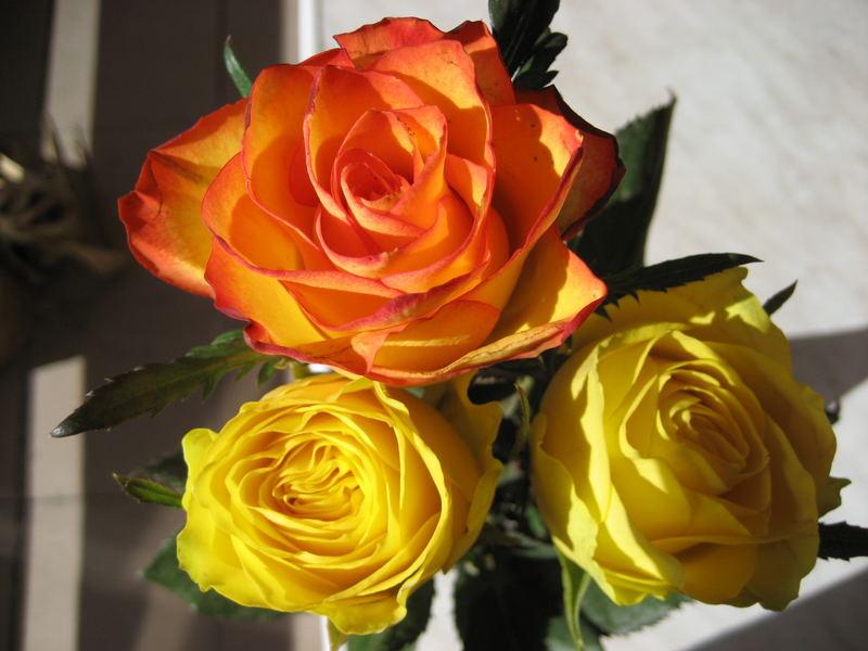 Rosen für eine liebevolle Frau....