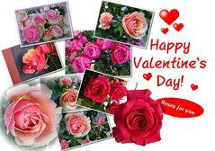 Rosen für euch
