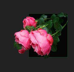 Rosen für Renate!