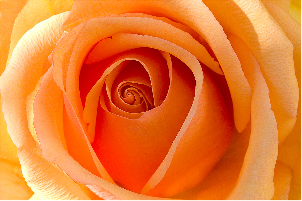 Rosen für Rosi