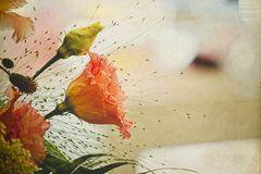 Rosen Gruß