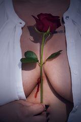"""""""Rosen haben Dornen"""""""