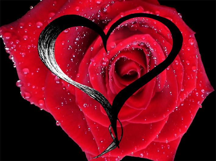 31 herz bilder mit rosen  besten bilder von ausmalbilder
