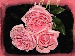 Rosen im Mirabellgarten