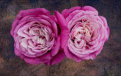 Rosen im Reliev