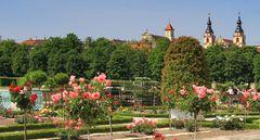 Rosen im Schlossgarten
