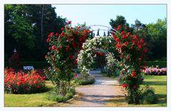 Rosen im Wertwiesenpark
