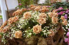 Rosen in rostfarben