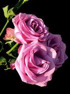 Rosen in Tonwerten...