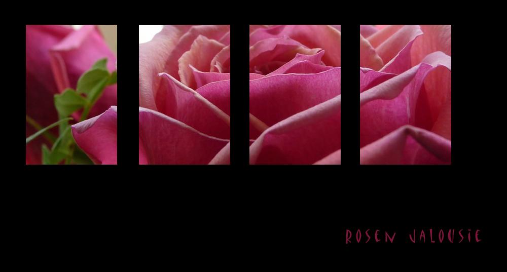 . rosen jalousie .