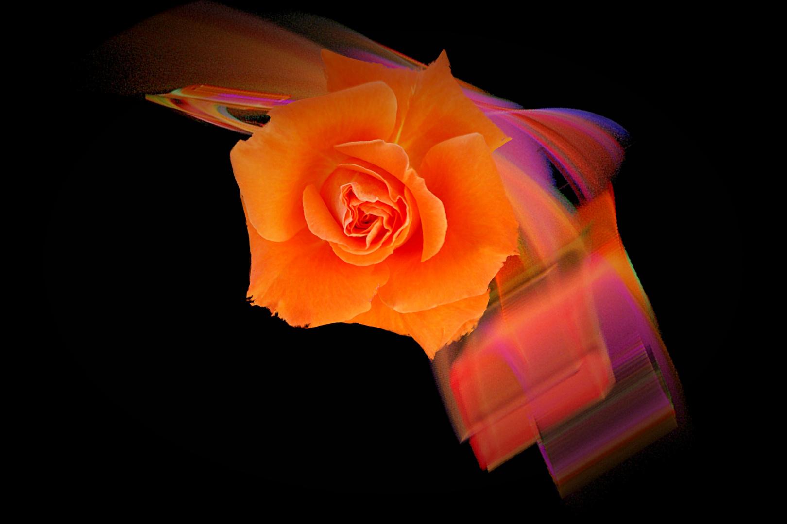 Rosen locken