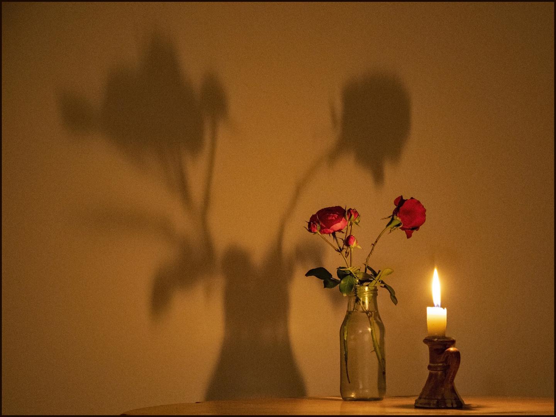 Rosen mit Licht und Schatten
