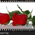 Rosen-Shooting