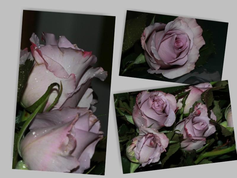 Rosen sind soooooo schön....