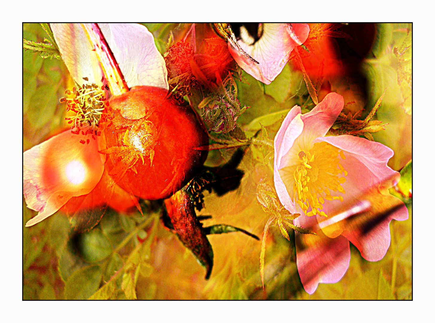 Rosen und Hagebutten